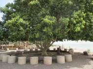 Tree under which we were healed