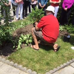rose planting 2